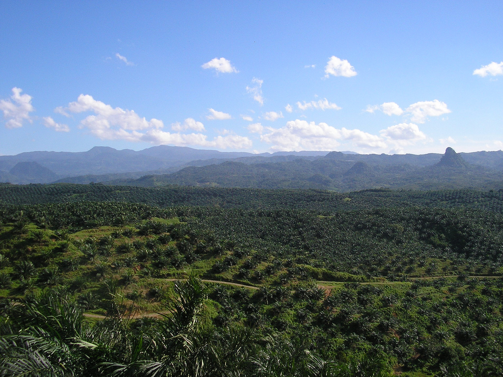 palm oil essays 2 sustainable palm oil promoting new measures to combat risks of forced labor and human trafficking in palm oil supply chains palm oil is almost ubiquitous.