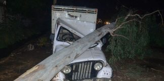 A tree fell on a car after a sand storm in northern India