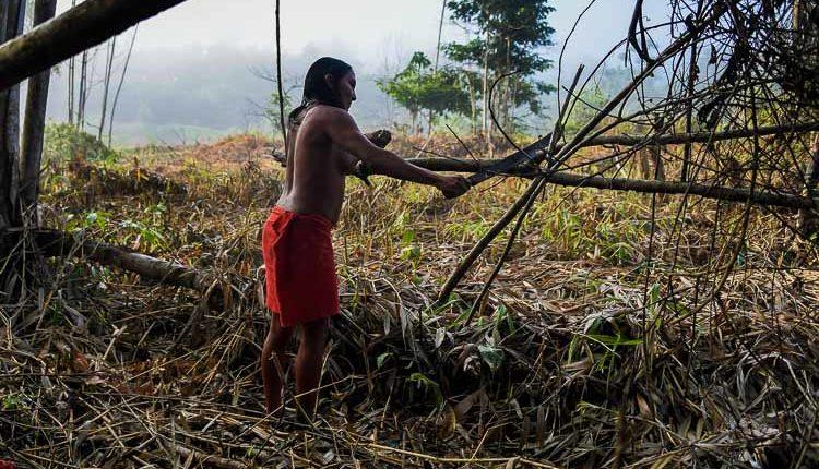 An indigenous woman gathering wood in Brazil