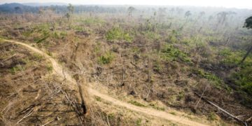The Amazon rainforest in Brazil after clearcutting.