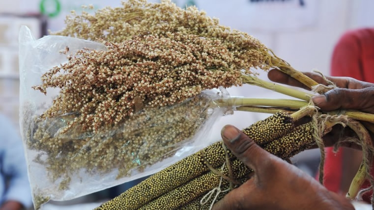 An Indian farmer displays grains and seeds